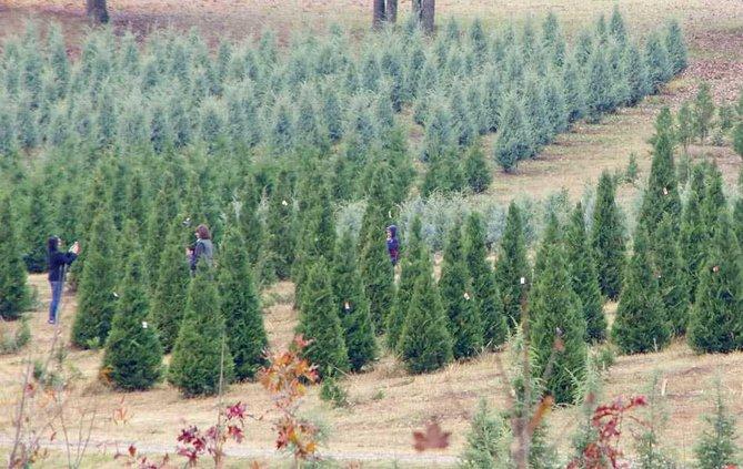 1WEB trees
